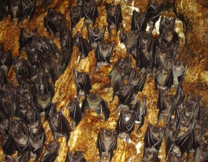 Visit the bat caves