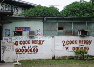 ...but you will find 2 or 4-cock derbies with P0.5M at stake.