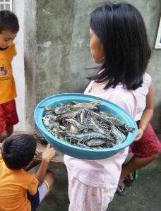 Fresh prawns delivered door to dor