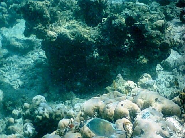 Pplata reef017