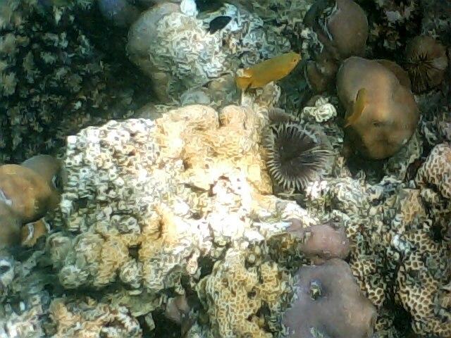 Pplata reef018
