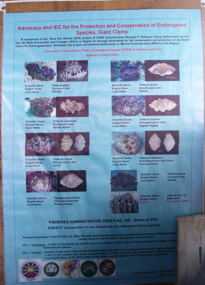 Information boards in the study centre describing the species of Giant Clam