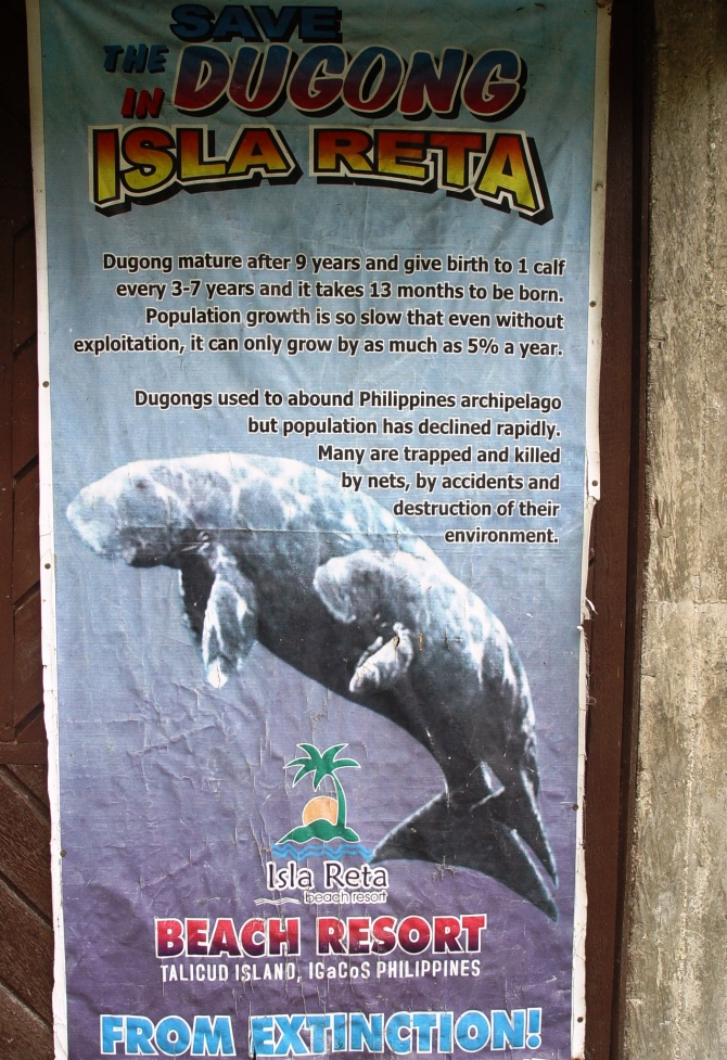 Still waiting to see my first  Dugong